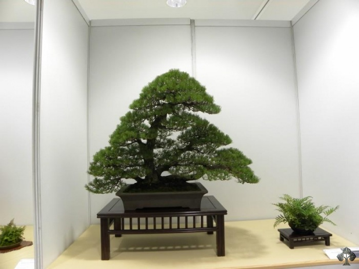 exposition_bonsai_niemeyer_2011_20111228_2013324052.jpg
